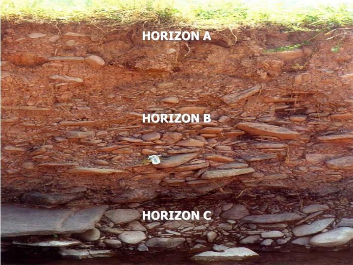 HORIZON A