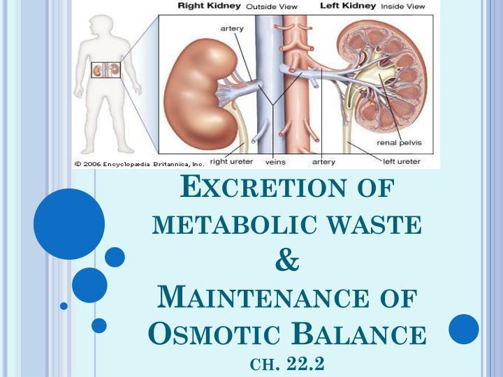 Excretion of metabolic waste maintenance of osmotic balance ch 22 2