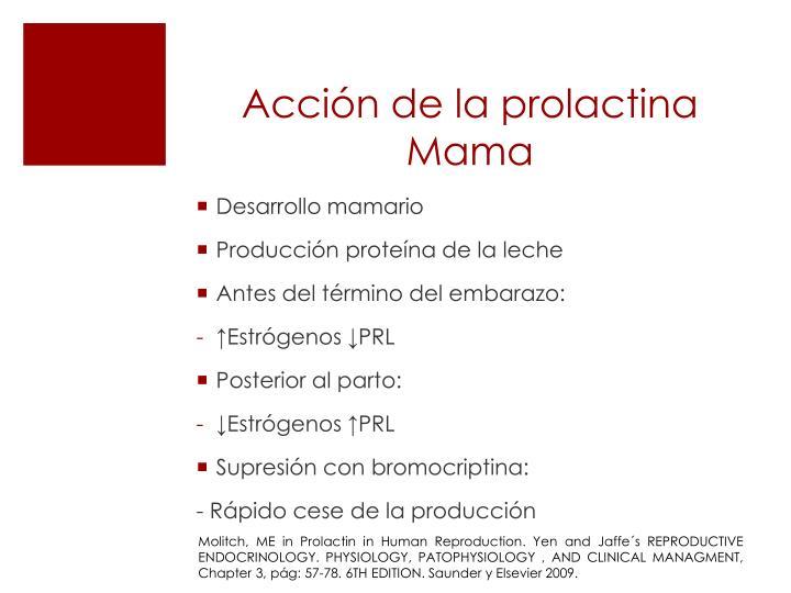 Acci n de la prolactina mama