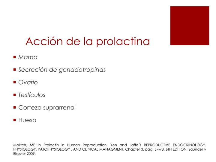 Acci n de la prolactina