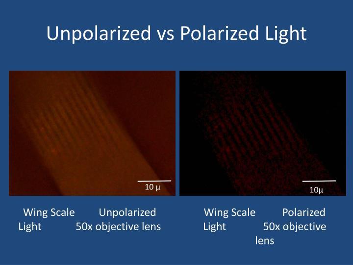 Unpolarized vs Polarized Light