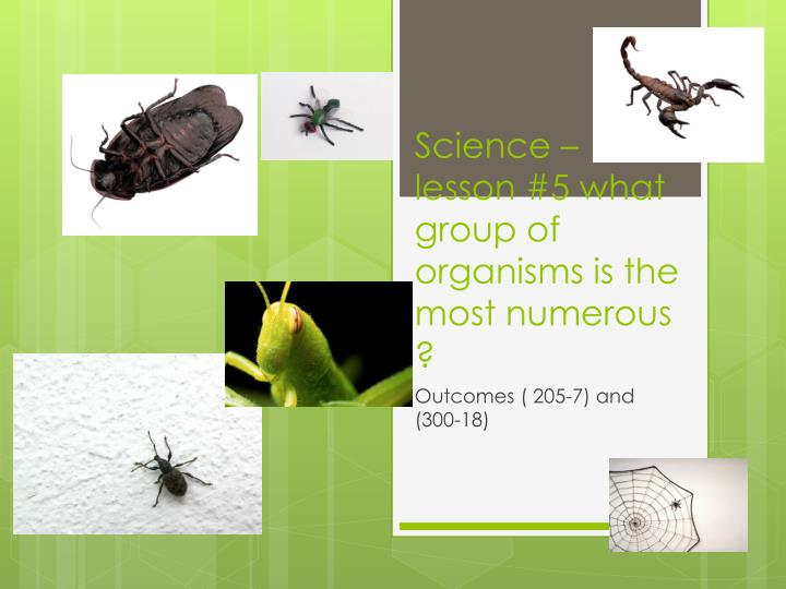 science lesson 5 what group of organisms is the most numerous n.