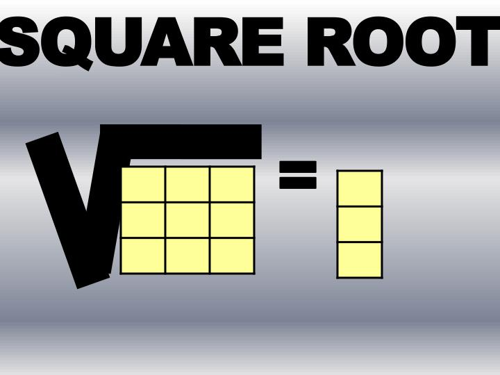 SQUARE ROO