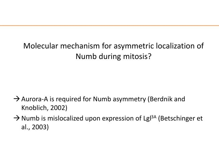 Molecular mechanism for asymmetric localization of Numb during mitosis?