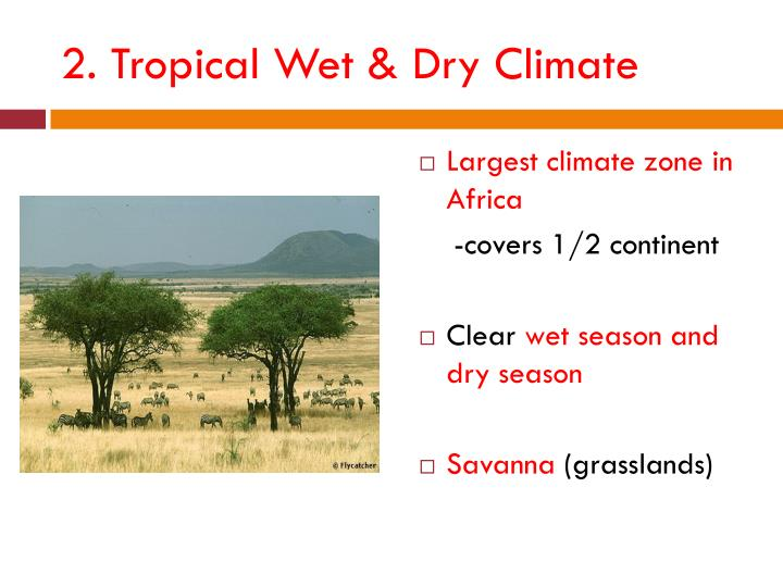 2. Tropical Wet & Dry Climate