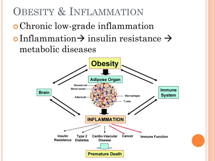 Obesity inflammation