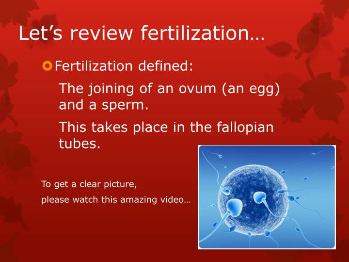 Let's review fertilization…