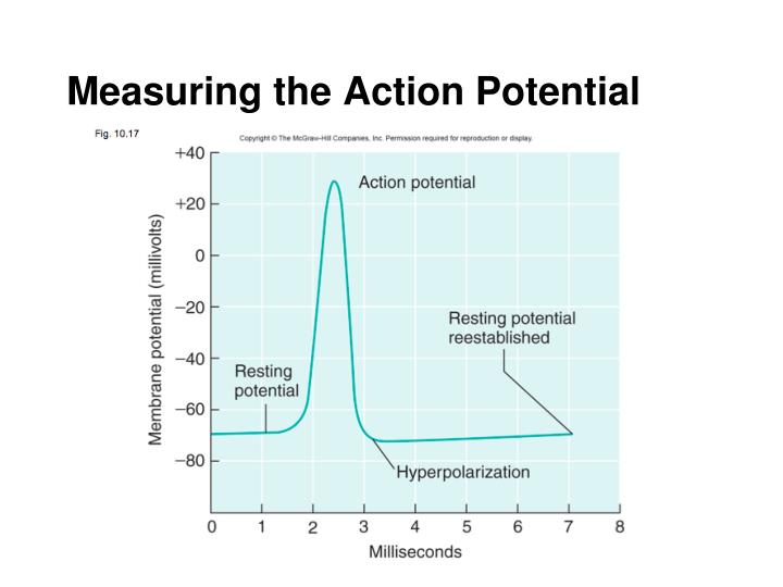 Measuring the Action Potential
