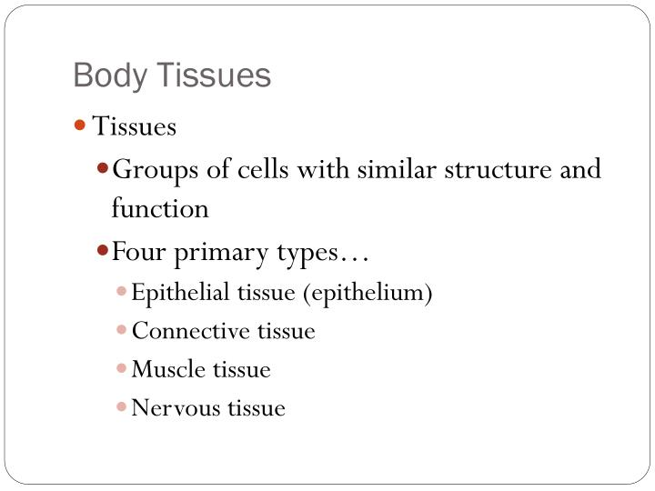Body Tissues