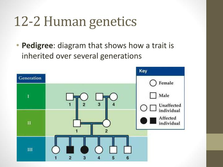 12-2 Human genetics