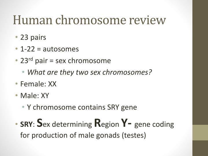 Human chromosome review