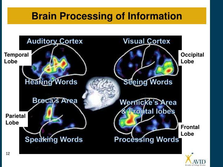 Brain Processing Activity