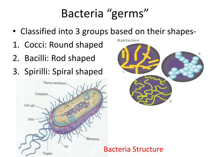 "Bacteria ""germs"""