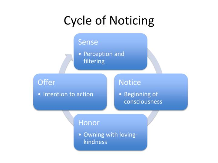 cycle of noticing n.