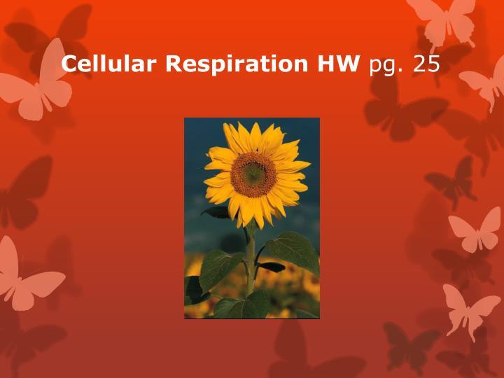 Cellular Respiration HW