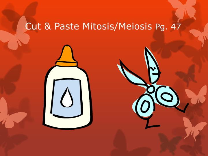 Cut & Paste Mitosis/Meiosis