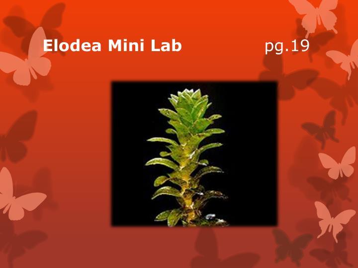 Elodea Mini Lab