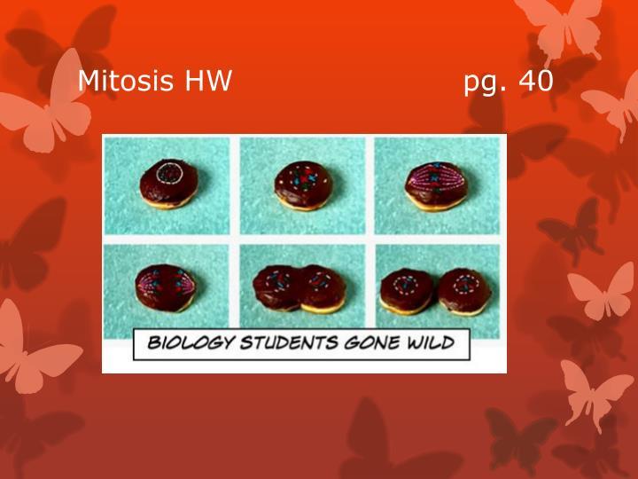 Mitosis HW                       pg. 40