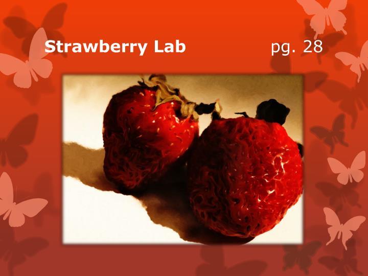 Strawberry Lab