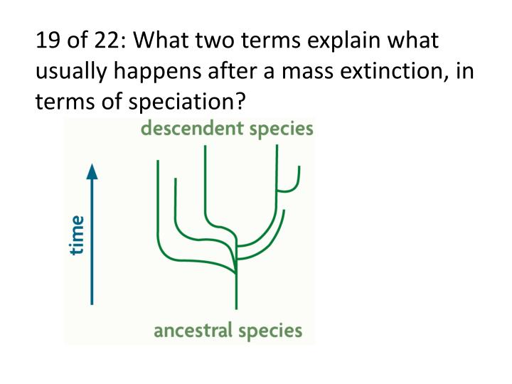 19 of 22: What two terms explain what usually happens after a mass extinction, in terms of speciation?
