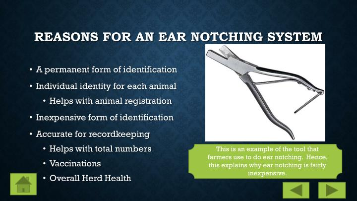 Reasons for an Ear Notching System