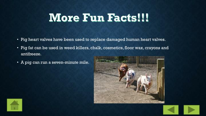 More Fun Facts!!!
