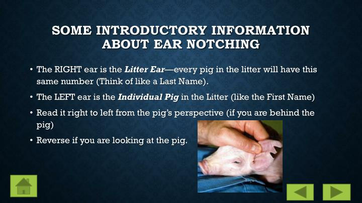 Some Introductory Information about Ear Notching