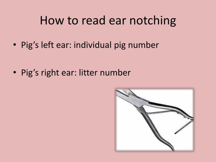 Ppt Ear Notching Powerpoint Presentation Id2652351