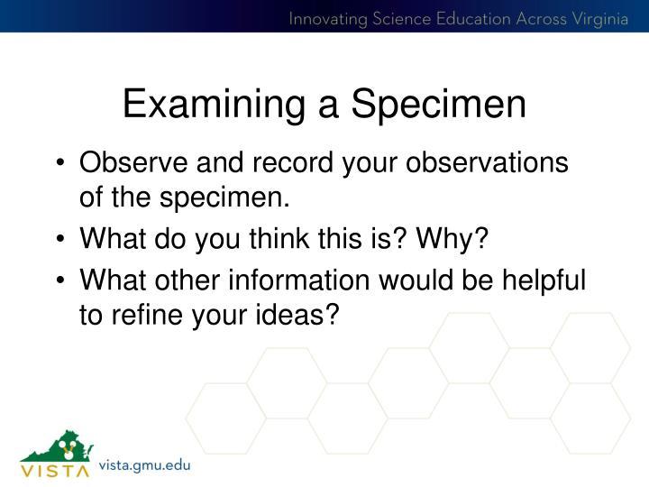 Examining a Specimen