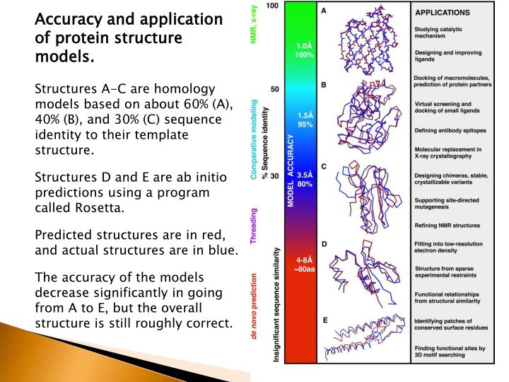 Accuracy and application of protein structure models.