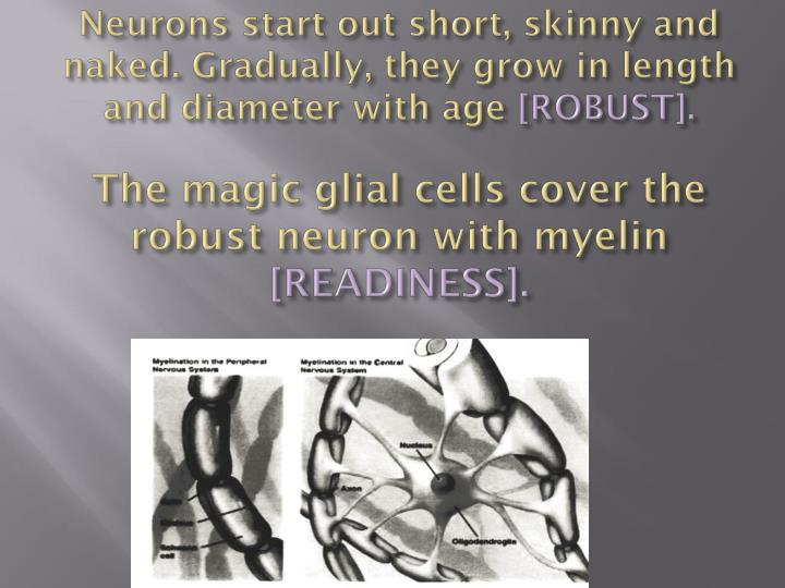 Neurons start out short, skinny and naked.
