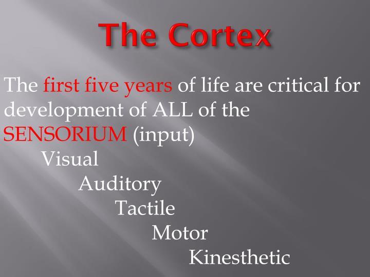 The Cortex
