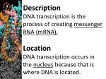 description dna transcription is the process of creating messenger rna mrna