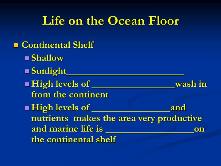 Life on the Ocean Floor