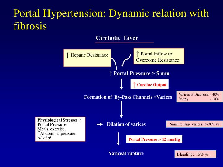 Portal Hypertension: Dynamic relation with fibrosis