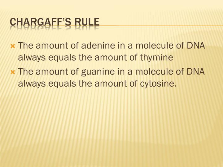 The amount of adenine in a molecule of DNA always equals the amount of thymine