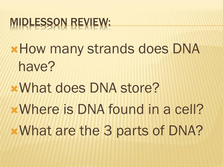 How many strands does DNA have?