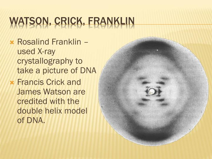 Rosalind Franklin – used X-ray crystallography to take a picture of DNA