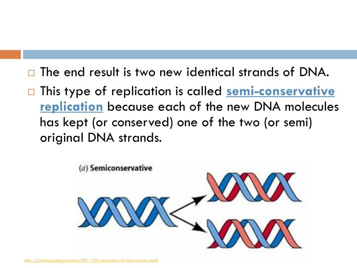 The end result is two new identical strands of DNA.