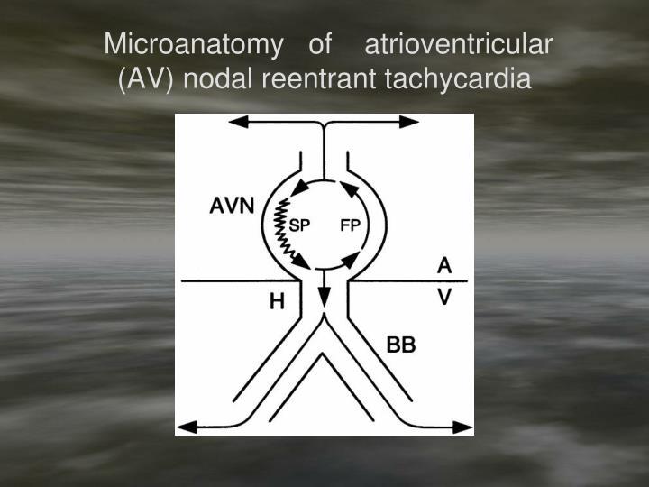 Microanatomy   of