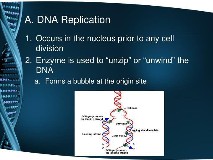 A. DNA Replication