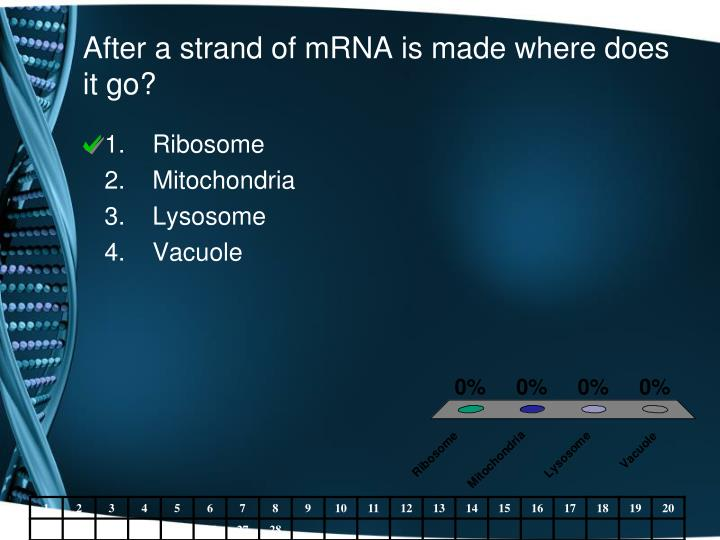 After a strand of mRNA is made where does it go?