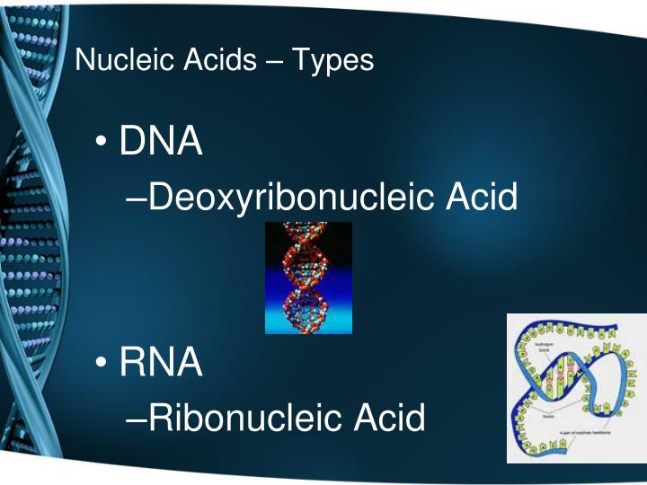 Nucleic Acids – Types