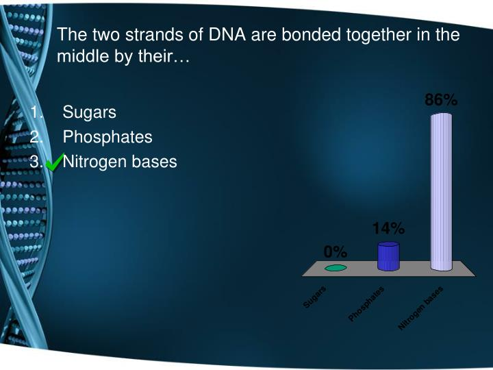 The two strands of DNA are bonded together in the middle by their…