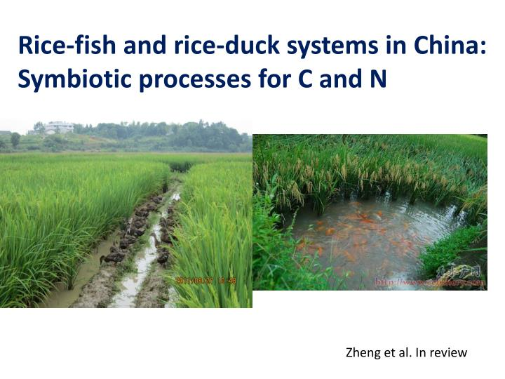 Rice-fish and rice-duck systems in China: