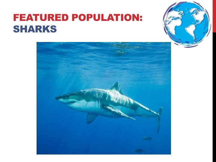 Featured population sharks