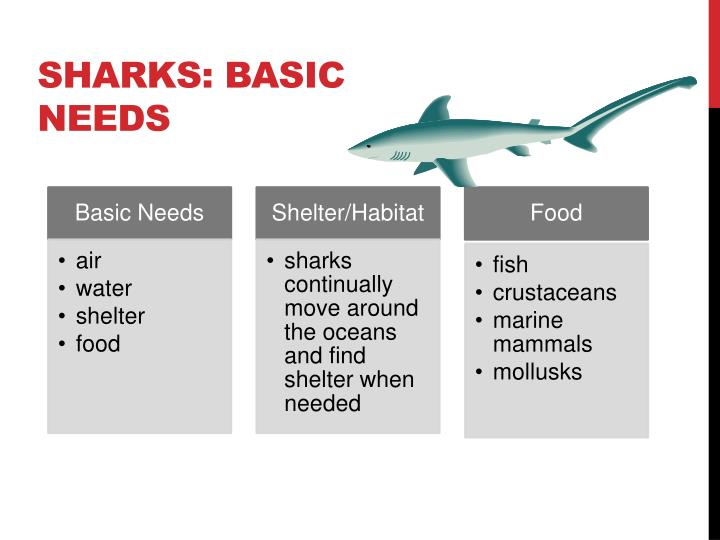 SHARKS: BASIC NEEDS