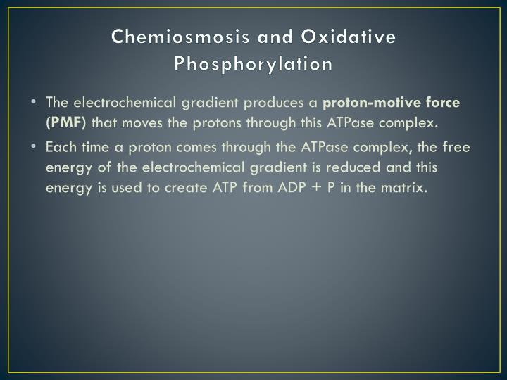 Chemiosmosis and Oxidative Phosphorylation