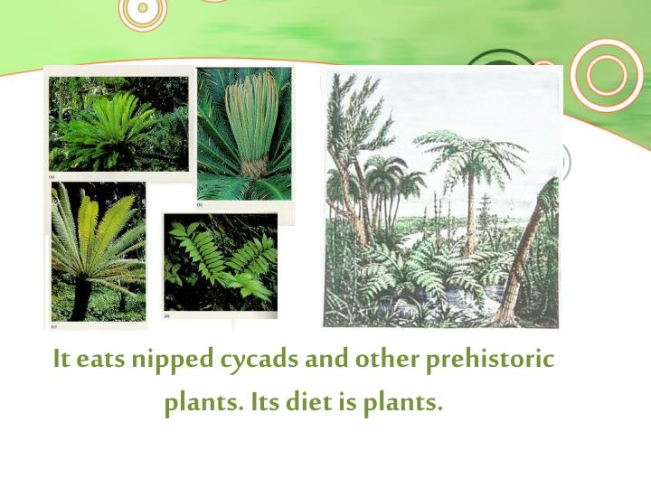 It eats nipped cycads and other prehistoric plants. Its diet is plants.
