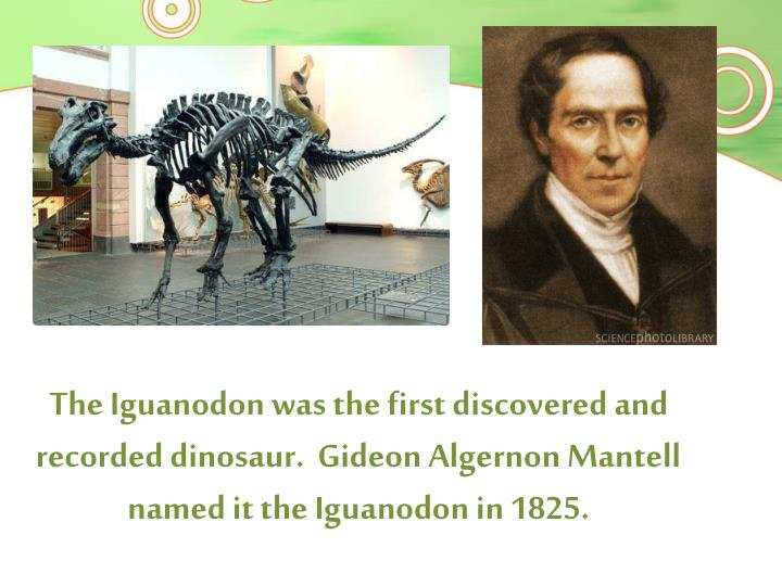 The Iguanodon was the first discovered and recorded dinosaur.  Gideon Algernon